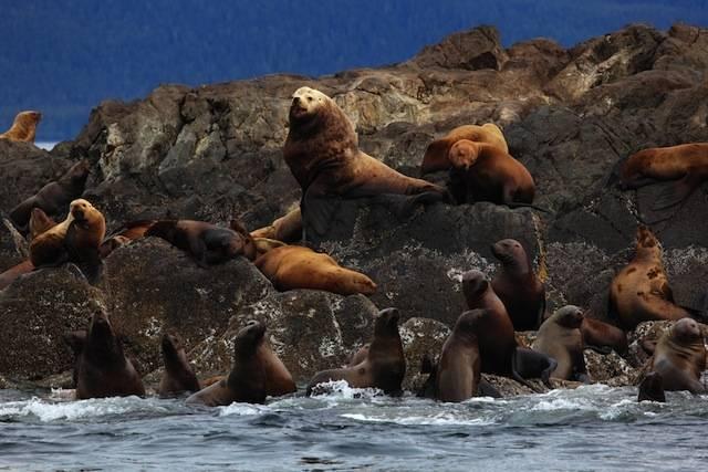 Командорские острова Камчатка фото