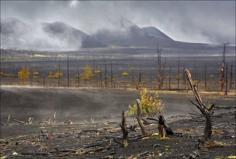 Мертвый лес Камчатка фото