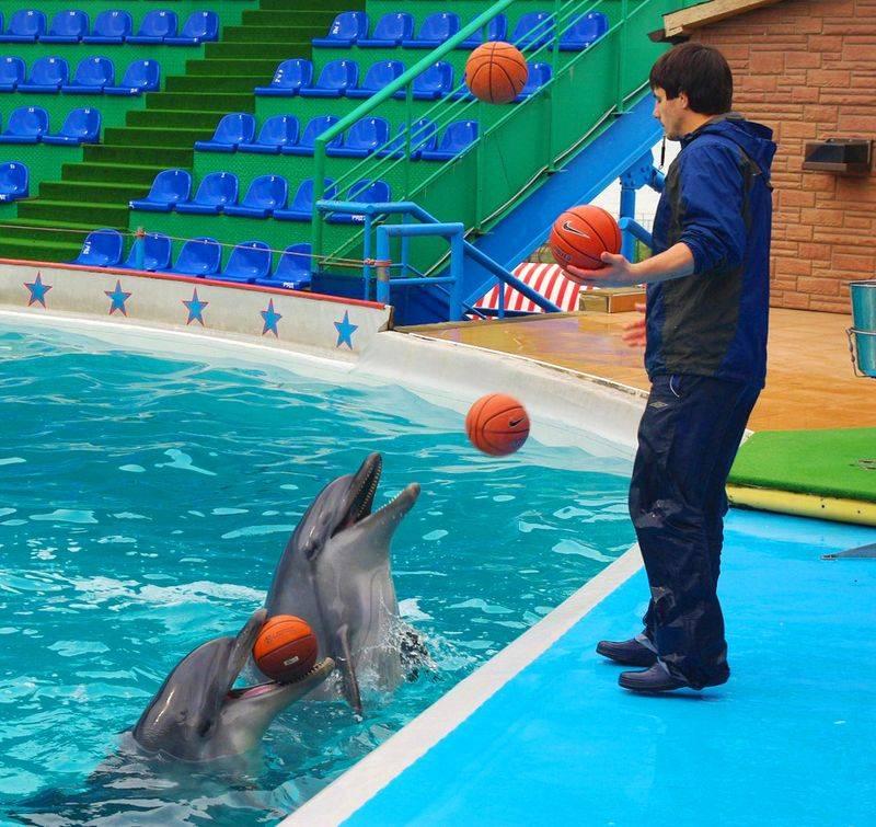 Утришский дельфинарий фото
