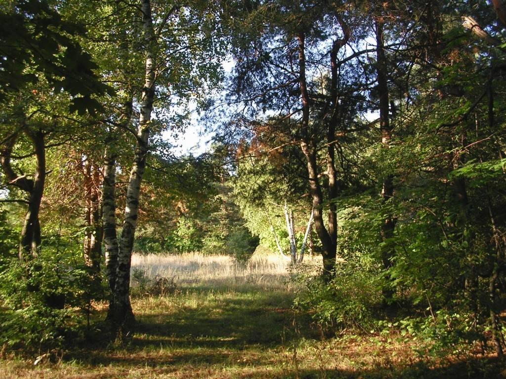 Лесопарк Кумысная поляна Саратов фото