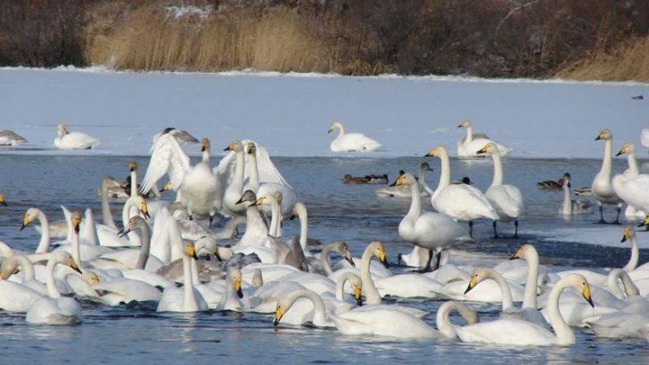 Леюеди Кроноцкое озеро фото
